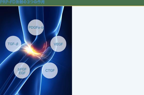 ひざ関節と成長因子